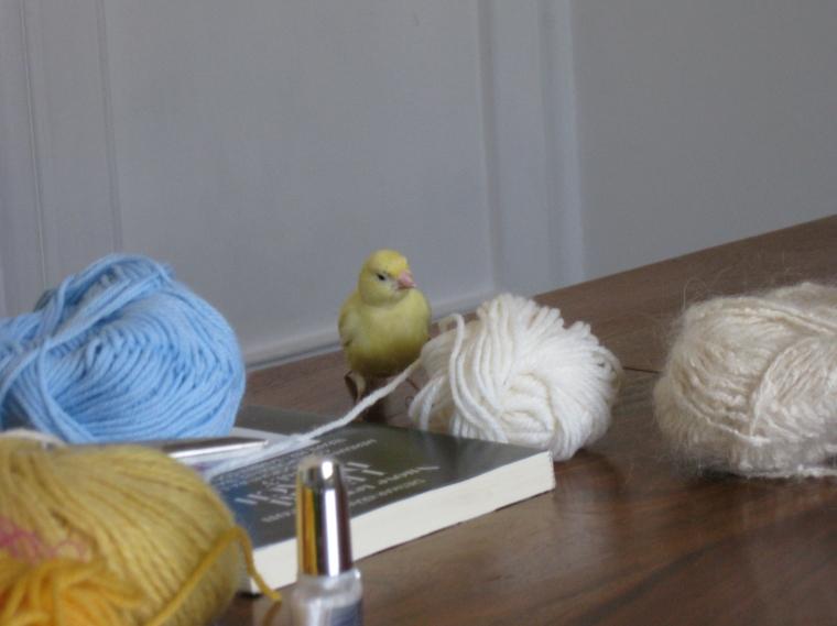 woodstock con la lana