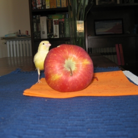 woodstock con la mela