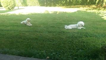 Casper e Fiocco